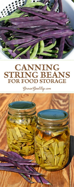 String beans are very productive and there are so many varieties to explore. Preserve the harvest bounty by pressure canning green beans for food storage.
