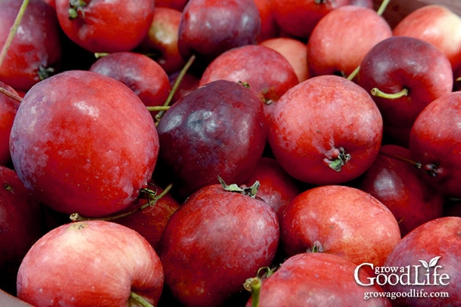 Transform the tart flavor of crabapples into a delicious homemade crabapple jelly. Crabapples have enough natural pectin so no additional pectin is needed for this crabapple jelly recipe.