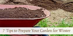 7 Tips to Prepare Your Garden for Winter