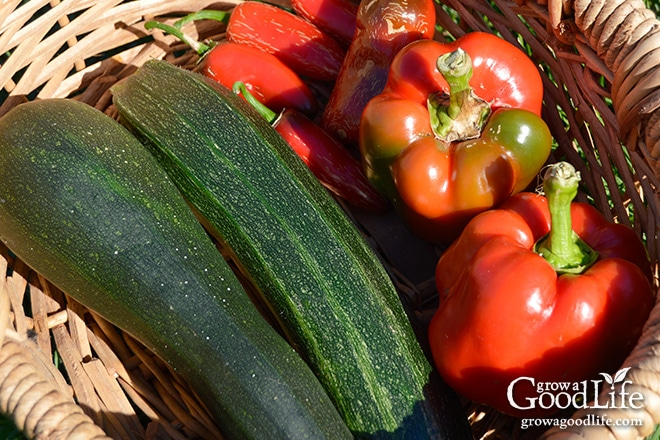 Celebrating the harvest and encouraging everyone to grow their own food! Sharing garden harvest photos for the week of September 21, 2015.