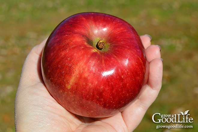 Weekly Harvest: October 26, 2015