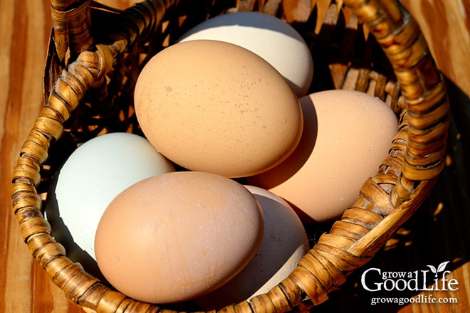 Eggs in a Basket   Grow a Good Life