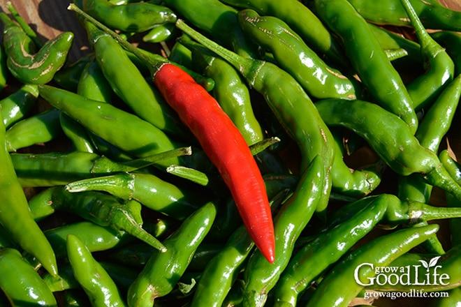 Weekly Harvest: October 5, 2015