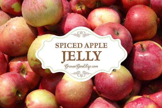 This spiced apple jelly recipe livens up the plain apple flavor with some traditional pairings including lemon juice, cinnamon, cloves, and allspice.