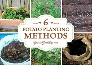 Potatoes are a major crop in the garden. They are easy to grow and store well over winter providing a nice addition to stews and roasts. Different growing methods work at different locations. Here are six different potato-planting methods for you to experiment with to grow your own food storage.