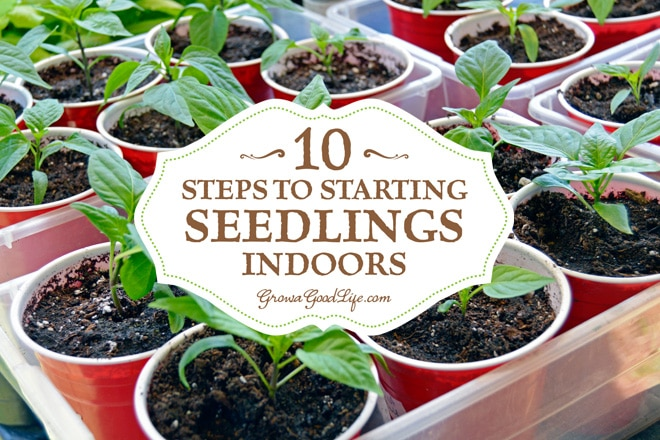 10 steps to starting seedlings indoors for What plants can i grow indoors