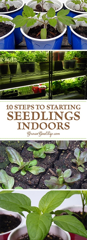 10 steps to starting seedlings indoors growing your own garden transplants from seed offers you more flexibly and control over your vegetables workwithnaturefo