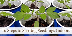 Ten Steps to Starting Seedlings Indoors
