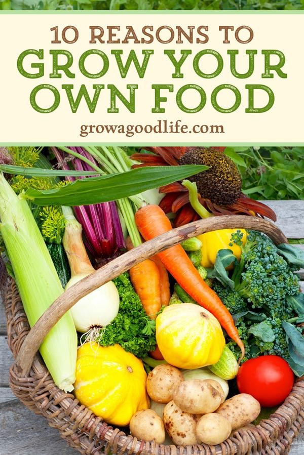 image of a basket filled with freshly harvested vegetables