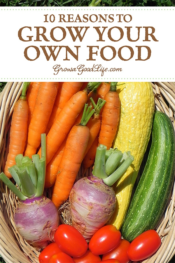 Do you ever wonder whether growing your own food is worth the time and effort? Here are some benefits to growing your own organic food for you, your family, and the environment.