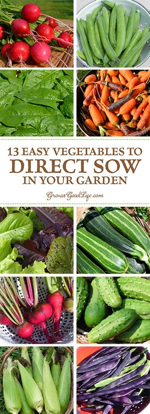 To direct sow your seeds just means to plant your seeds outdoors in the garden where it will grow instead of starting the seeds indoors in containers under lights. Plants that are either difficult to transplant or don't need extra time to get a jump start can be sowed directly into the ground.