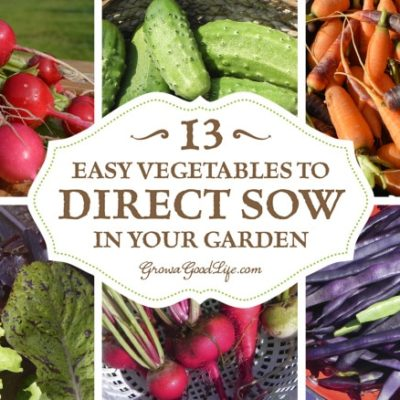 13 Easy Vegetables to Direct Sow