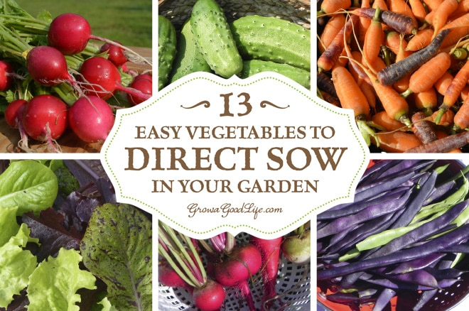 To direct sow your seeds just means to plant your seeds outdoors in the garden instead of starting the seeds indoors under lights. Plants that are either difficult to transplant or don't need extra time to get a jump start can be sowed directly into the ground. Here are 13 easy vegetables to direct sow in your garden.