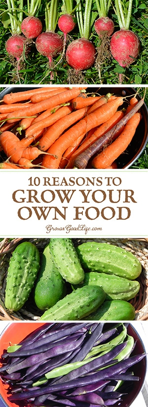 You don't need a lot of land or gardening experience to benefit from growing your own food. Here are 10 reasons to consider starting a vegetable garden.