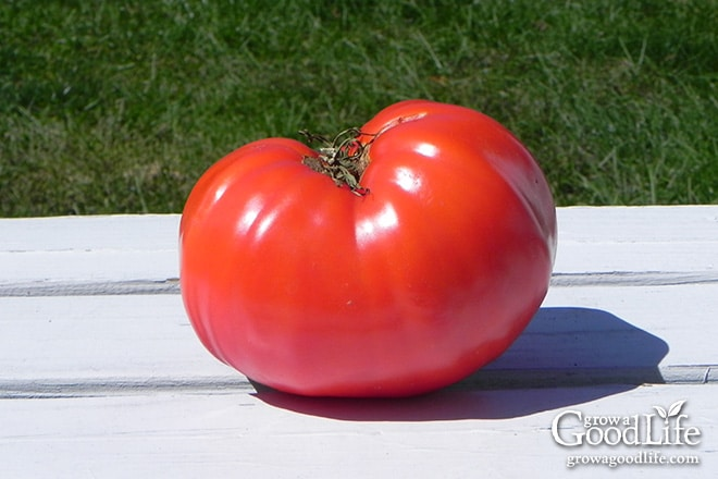 There is nothing like biting into a ripe tomato handpicked from the vine. It delights all your senses from its vibrant red color, sun-warmed skin, and the firm snap as your teeth sink in. Then the flavor, aroma, and juiciness burst forth as you take your first mouthful. This is just one of the pleasures you can enjoy when you grow your own food.