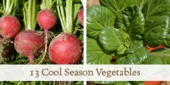 13 Cool Season Crops that Mature in 60 Days