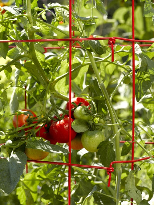 Foldable Tomato Trellis Supports from Gardener's Supply