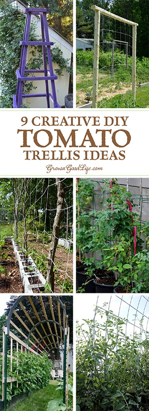 A tomato trellis is a freestanding structure usually made from wood or metal that is used to support the sprawling vines and heavy fruit of the tomato plant.The type of trellis support you will need for your tomatoes depends on the variety you are growing.