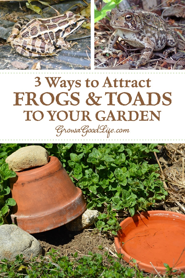 3 Ways to Attract Toads to Your Garden: Attracting frogs and toads to your vegetable garden will help moderate pest populations without the need for chemical or natural pesticides.