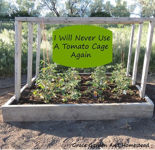 Tomato Garden Ideas growing tomato plants up a hanging string tomato trellis Tomato Planter Raised Bed From Grace Garden And Homestead