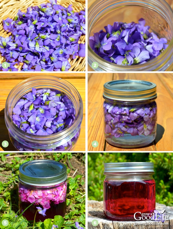 steps to making wild violet vinegar