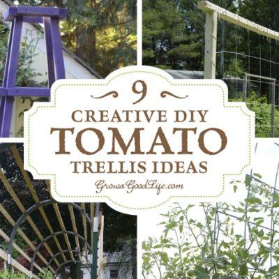 9 Creative DIY Tomato Trellis Ideas