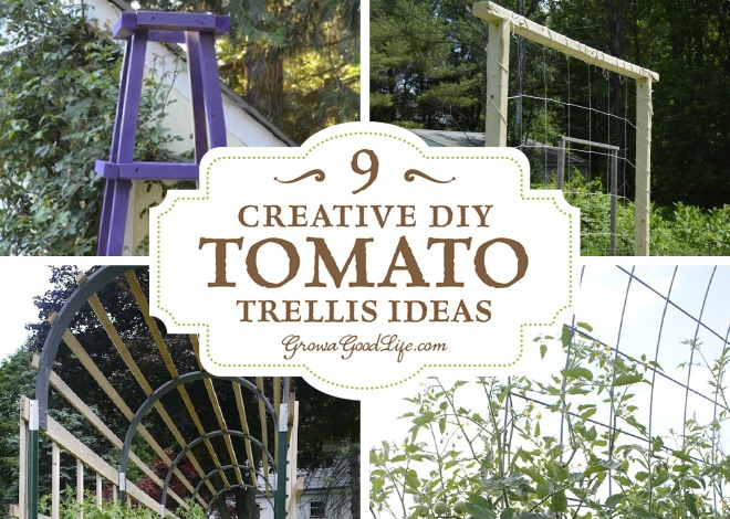 9 Creative Diy Tomato Trellis Ideas