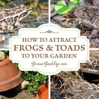 Attracting and encouraging frogs and toads to live in your garden keeps the pest population down and reduces the need for pesticides or other natural insect deterrents. Just one frog or toad can eat up to 10,000 pests during the garden season. Here are some tips on how to attract and encourage toads and frogs to live in your garden.