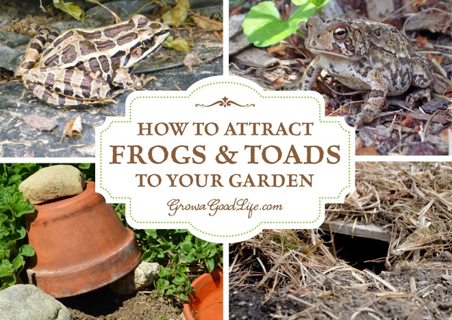 How to Attract Frogs and Toads to Your Garden