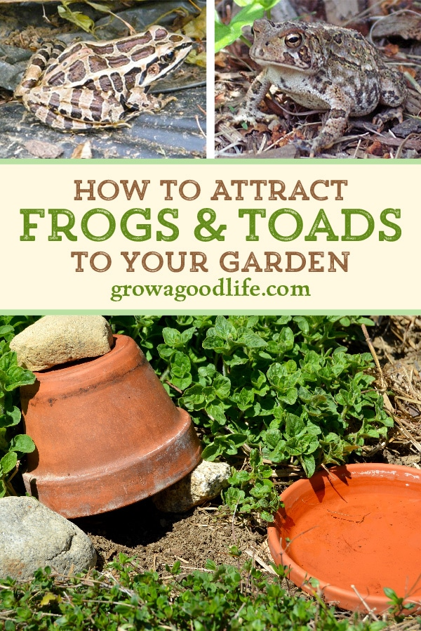 Inviting Frogs and Toads to Your Garden
