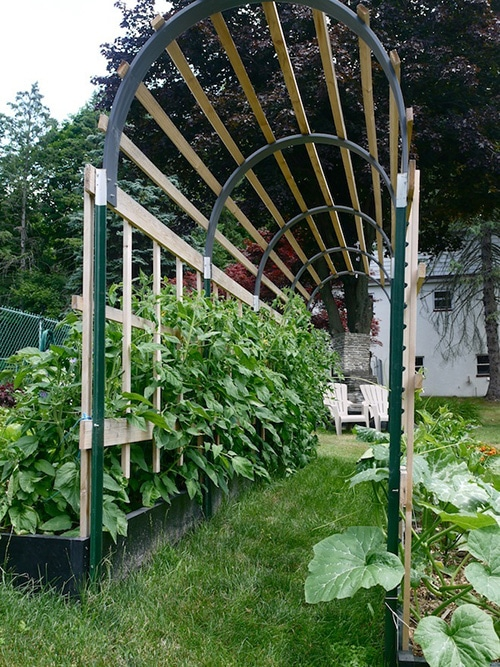 Diy Trellis Ideas Part - 44: Tomato Arch Trellis At Learning And Yearning