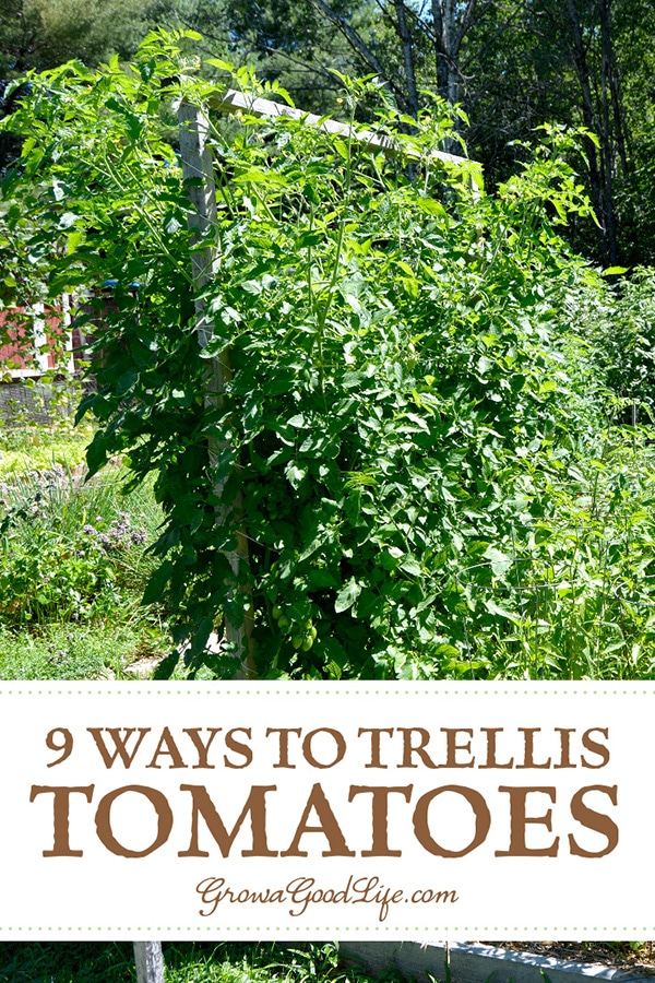 Providing support for your tomato plants helps keep the plants healthy, so they can produce maximum yields. The type of trellis support you will need for your tomatoes depends on the variety you are growing. Read on for some creative DIY tomato trellis ideas.