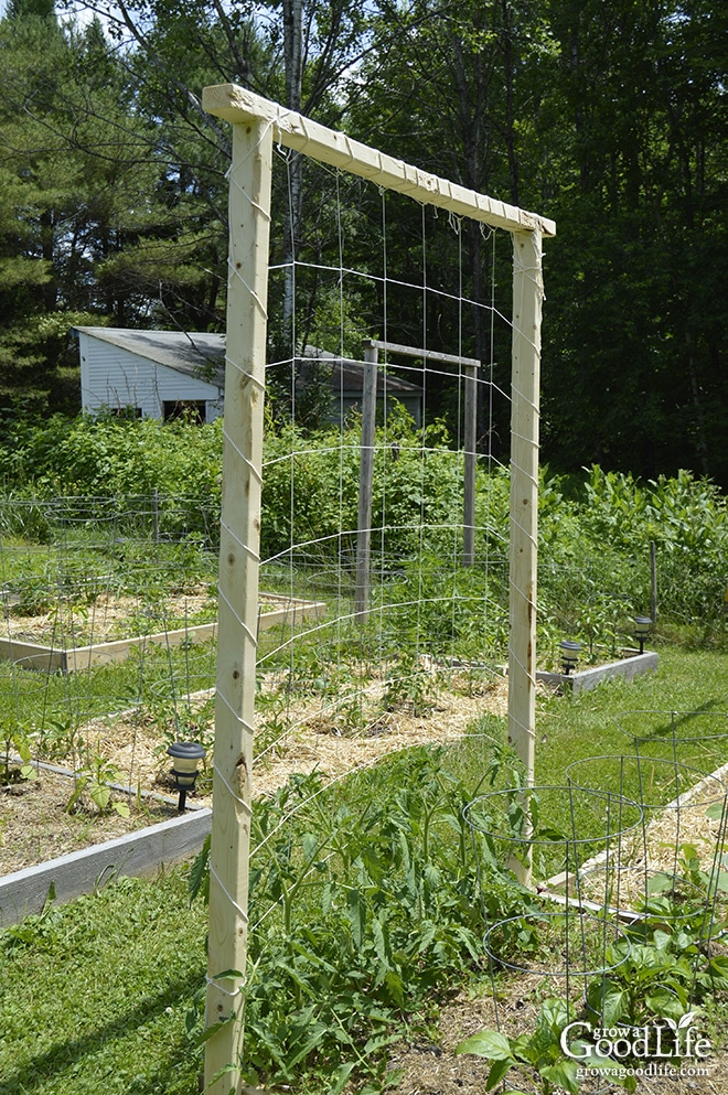 Amazing Tomato Trellis Ideas Part - 3: A Tomato Trellis Is A Freestanding Structure Usually Made From Wood Or  Metal That Is Used