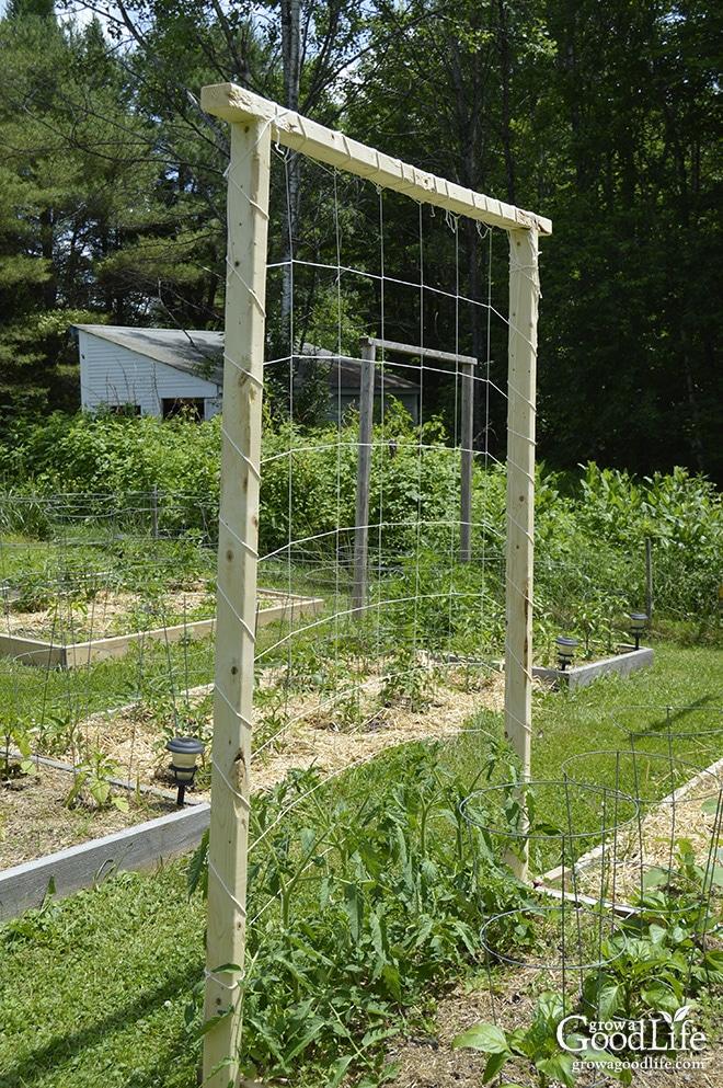 9 creative diy tomato trellis ideas How to build a trellis