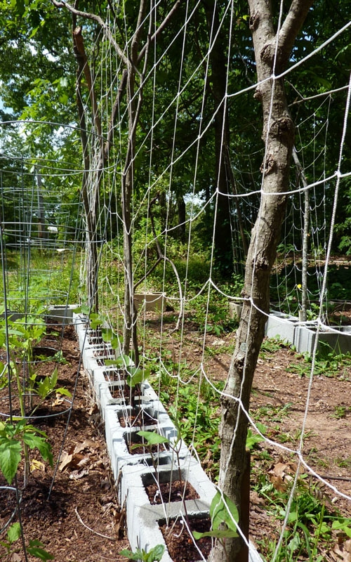 Creative DIY trellis support using reclaimed supports from Attainable Sustainable