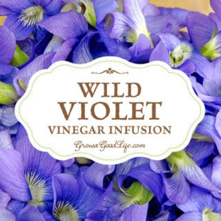 See how simple it is to infuse vinegar with a subtle violet sweetness and a purple flush of color. Wild violet infused vinegar can be used to make delicious salad dressing for spring vegetables and as a marinade for meats or grilled vegetables.