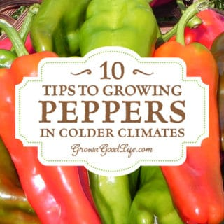 10 Tips to Growing Peppers in Colder Climates