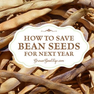 How to Save Bean Seeds to Plant Next Year