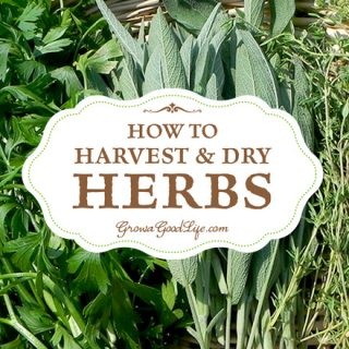 After harvesting, you want to dry herbs quickly to preserve their essential oils for the greatest flavor intensity and medicinal properties.