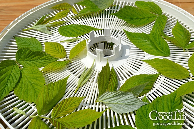 A dehydrator works by circulating a gentle flow of air through screens.