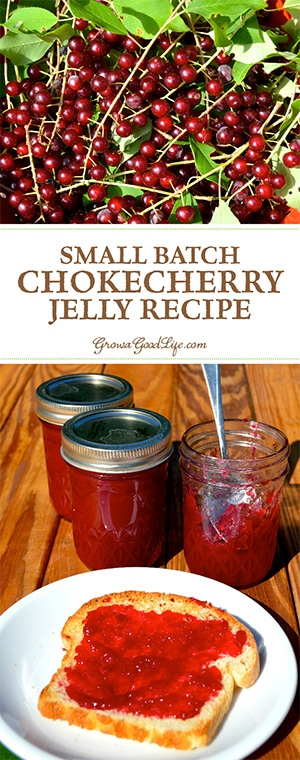 This small batch of chokecherry jelly only requires one pound of foraged chokecherries. It is a perfect balance of tart and sweet resulting in a jelly that tastes delicious on homemade bread and pairs well with poultry dishes.