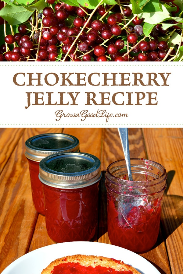 Make use of foraged wild fruit for this old time favorite chokecherry jelly recipe. Take a stroll down memory lane and try this small batch chokecherry jelly recipe.