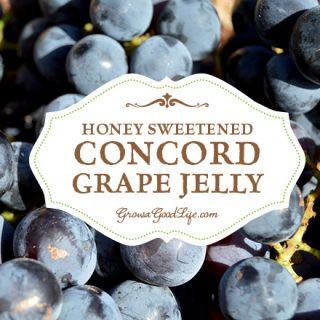 Honey Sweetened Concord Grape Jelly