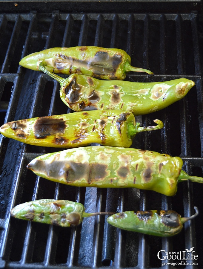 How to Roast and Peel Peppers: Roasting peppers enhances the flavor and allows the tough, bitter skin to peel away from the pepper.