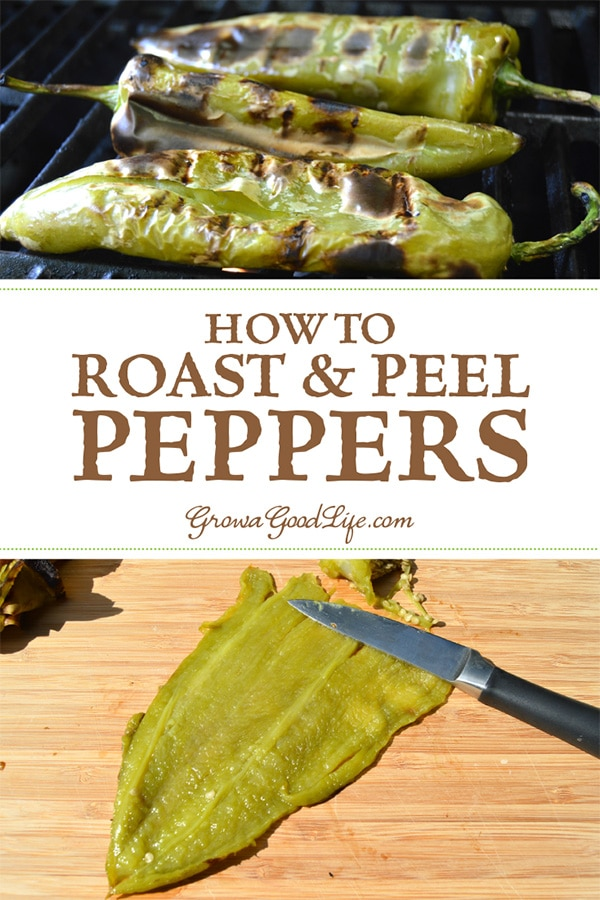Roasting enhances the sweetness of the pepper and adds a nice smoky char depth. Roasted and peeled chile peppers can be used in your favorite recipes right away or frozen for later.
