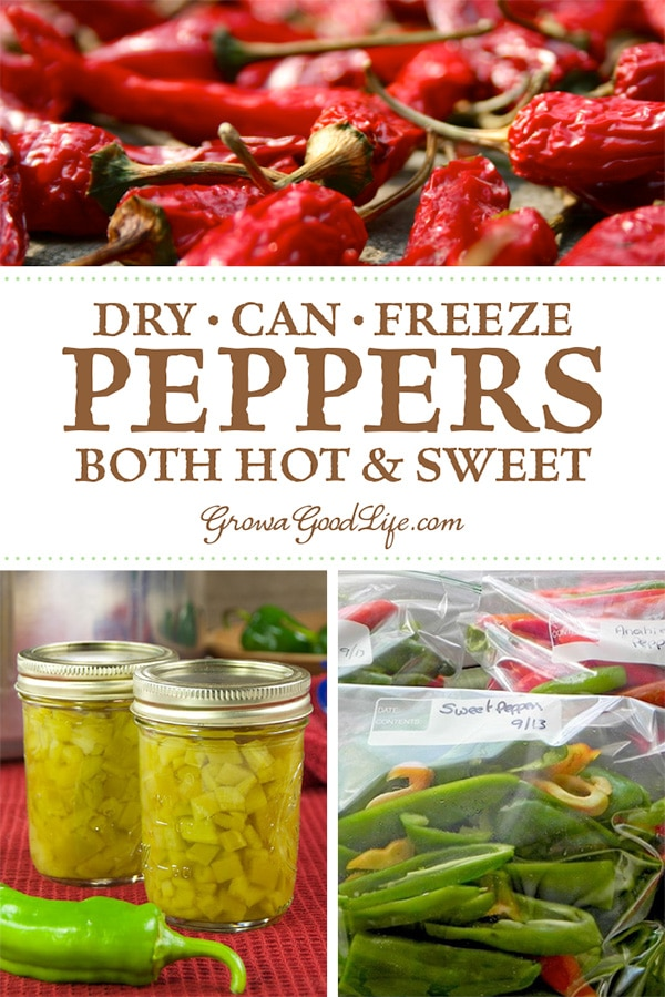 Looking for ways to preserve peppers? Learn several ways to preserve peppers so that you can enjoy the harvest bounty all year long!