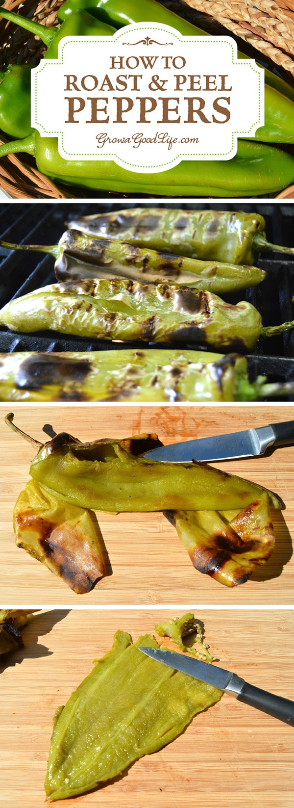 Any type of pepper can be roasted, including green, red or yellow, hot or sweet. Roasting enhances the sweetness of the pepper and adds a nice smoky char depth. Roasted and peeled peppers can be used in your favorite recipes right away or frozen for later.