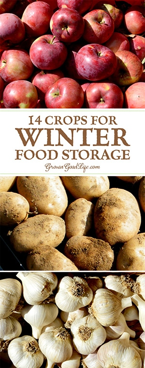 Take advantage of your local farmers' markets and farm stands in the fall and stock up on these locally grown crops for your winter food storage.If you have an area in your basement, crawlspace, or garage that stays cool all winter long, you can make use of these cold spots to keep storage crops fresh well into winter.