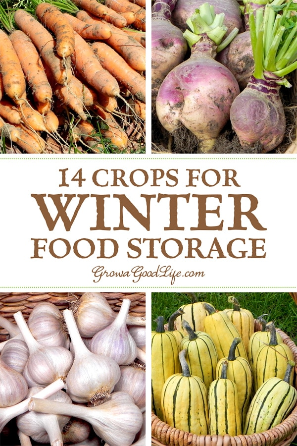 14 Crops for Winter Food Storage: If you have an area in your basement, crawlspace, or garage that stays cool all winter long, you can make use of these cold spots to keep storage crops fresh well into winter.