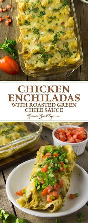 Chicken enchiladas with roasted green chile sauce is a delicious meal option when you're craving Southwestern-style comfort food. The mellow spicy flavor of the Anaheim or New Mexico type peppers pairs well with shredded chicken and Mexican spices and cheese.